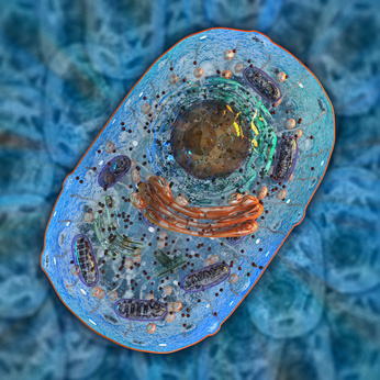 Internal structure of an animal cell. 3d illustration.