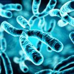 染色体の構造が維持されると長寿になるか?