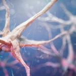 認知機能と長寿は関係があるか?